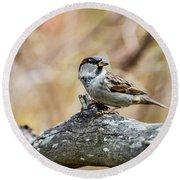 House Sparrow Round Beach Towel