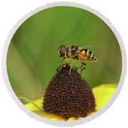 Hoverfly On Brown Eyed Susan Round Beach Towel