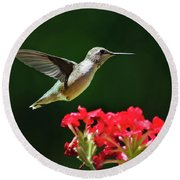 Hovering Hummingbird Round Beach Towel by Christina Rollo