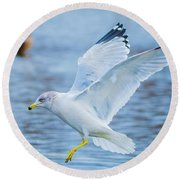 Hovering Seagull Round Beach Towel