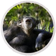 Howling Chimpanzee Round Beach Towel