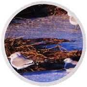 Huddling On A Winter Day  Round Beach Towel