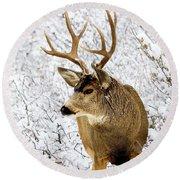 Huge Buck Deer In The Snowy Woods Round Beach Towel