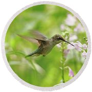 Hummer And Obedient Plant Round Beach Towel