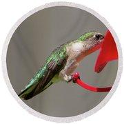 Humming Bird 10 Round Beach Towel