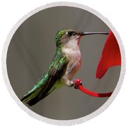 Humming Bird 8 Round Beach Towel