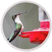 Hummingbird 33 Round Beach Towel