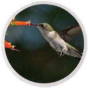 Hummingbird #4 Round Beach Towel