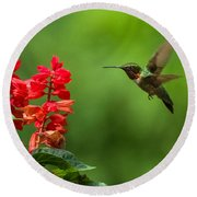 Hummingbird And Scarlet Sage Round Beach Towel