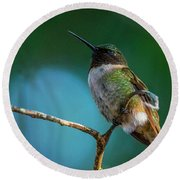 Hummingbird At Rest Round Beach Towel