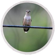 Hummingbird At Sunrise I See You Cameraman 02 Round Beach Towel