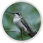 Hummingbird Close-up Round Beach Towel