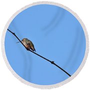 Hummingbird Contemplating Food II Round Beach Towel