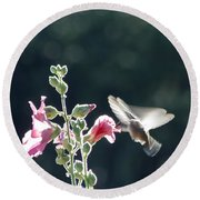 Hummingbird Drinking Pink Hollyhock Photography Round Beach Towel