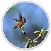 Hummingbird Feeling Frisky 1 Round Beach Towel