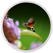 Hummingbird Hawk Moth - Four Round Beach Towel