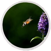 Hummingbird Hawk Moth - Three Round Beach Towel