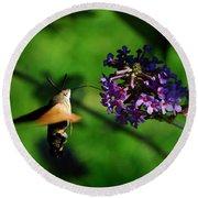 Hummingbird Hawk Moth 2 Round Beach Towel