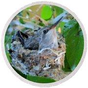 Hummingbird In Nest 1 Round Beach Towel