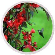 Hummingbird In The Flowering Quince - Digital Painting Round Beach Towel