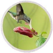 Hummingbird Nose Dive Round Beach Towel