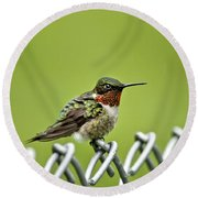 Hummingbird On A Fence Round Beach Towel