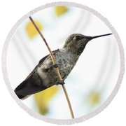 Hummingbird On Tightrope Round Beach Towel