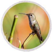 Hummingbird Perched II Round Beach Towel