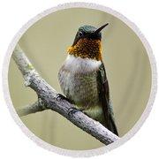 Hummingbird Portrait Square Round Beach Towel