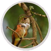 Hummingbird With An Itch Round Beach Towel