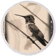Hummingbird With Old-fashioned Frame 3 Round Beach Towel