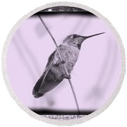 Hummingbird With Old-fashioned Frame 4 Round Beach Towel