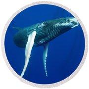 Humpback Whale Calf Round Beach Towel