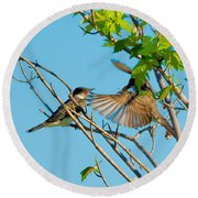 Hungry Birds In Tree Close-up Round Beach Towel