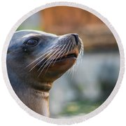 Sea Lion Round Beach Towel