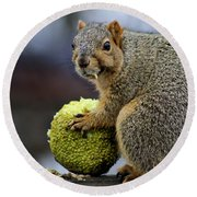 Hungry Squirrel 1 Round Beach Towel