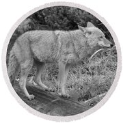 Hunting With Ears Back Black And White Round Beach Towel