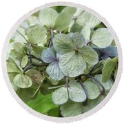 Hydrangea  In Purple And Pale Yellow Round Beach Towel