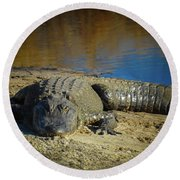 I Am Gator, No. 60 Round Beach Towel