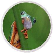 I See You - Tiger Leg Monkey Frog Round Beach Towel