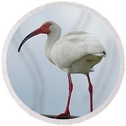 Ibis In The Morning Round Beach Towel