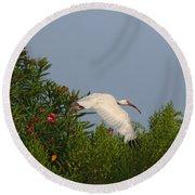 Ibis In The Oleander Round Beach Towel
