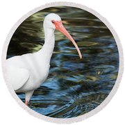 Ibis In The Swamp Round Beach Towel
