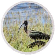Ibis Looking Around Round Beach Towel