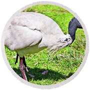 Ibis Looking For Food Round Beach Towel