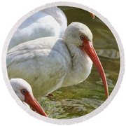 Ibis Three Round Beach Towel