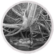 Twisted Roots  Round Beach Towel