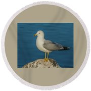 Idaho Sea Gull Round Beach Towel