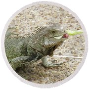 Iguana Eating Lettuce With His Tongue Sticking Out Round Beach Towel