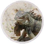 Iguana Sitting On A Sandy Beach In Aruba Round Beach Towel